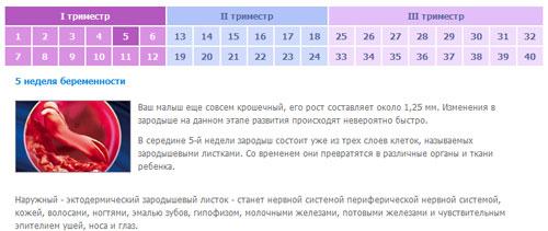 Калькулятор беременности онлайн по неделям с фото